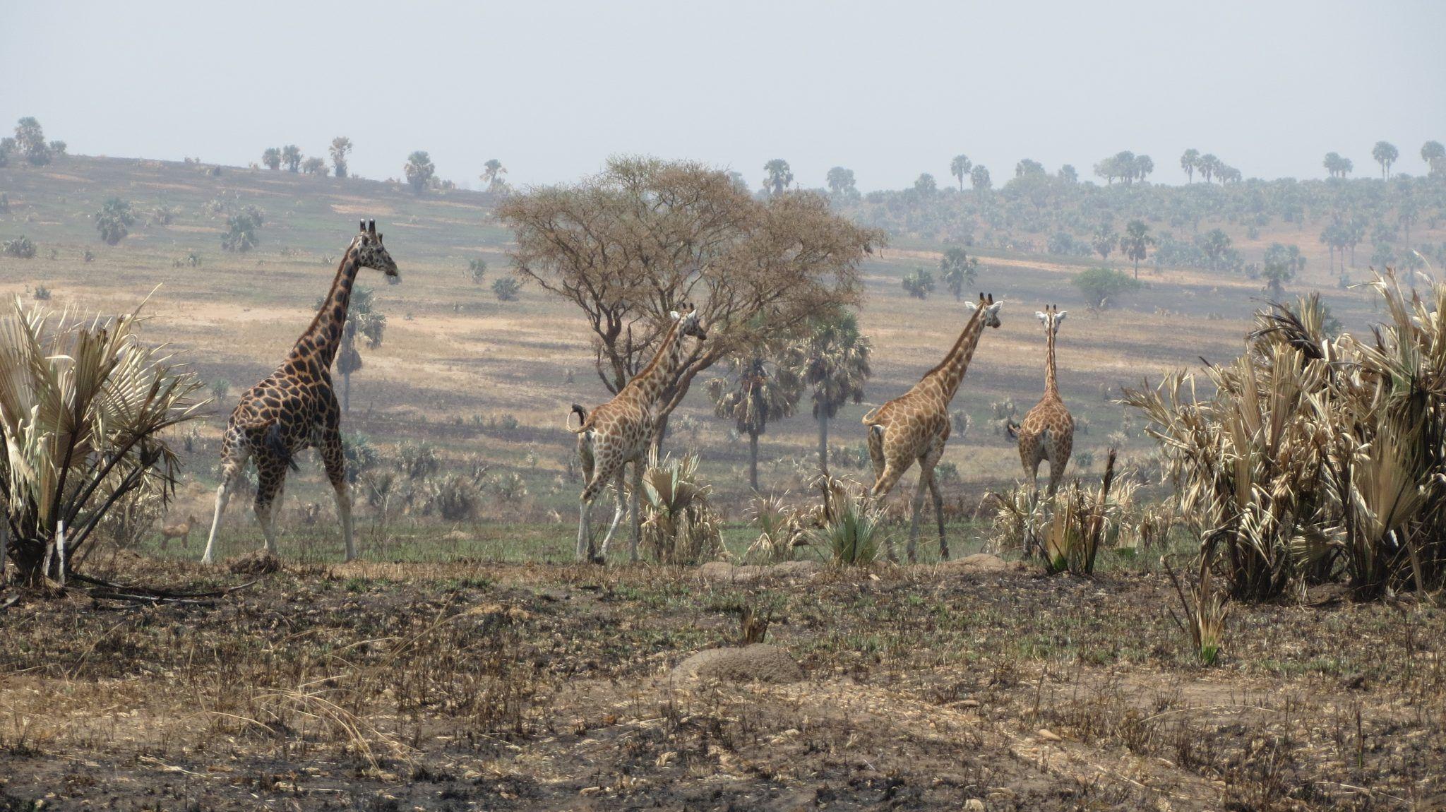 Dwars door Oeganda 2019